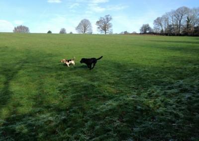 Puppy Pals Dog Walking