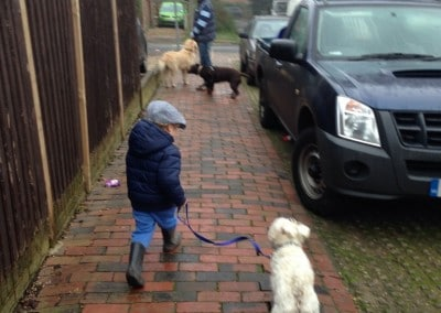 Puppy Pals Dog Boarding
