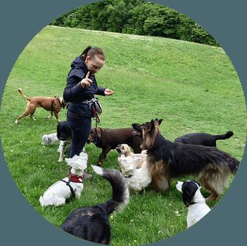 Llinos dog walker
