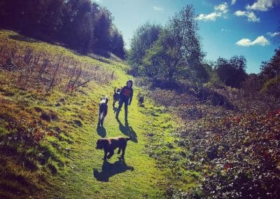 dog walker crowborough
