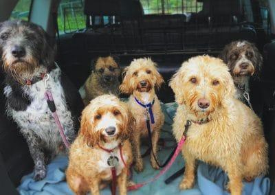 dog walker eridge heathfield mayfield