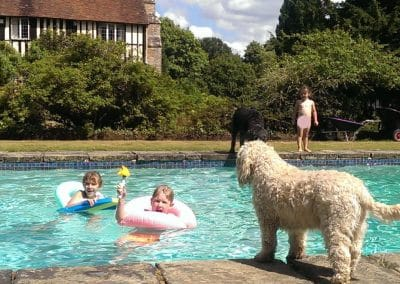 dogs and kids playing in swimming pool